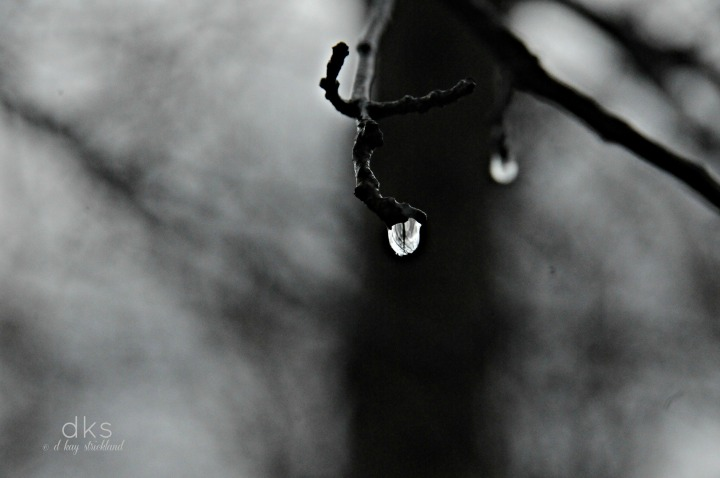 Spring opens with a drop of hope...