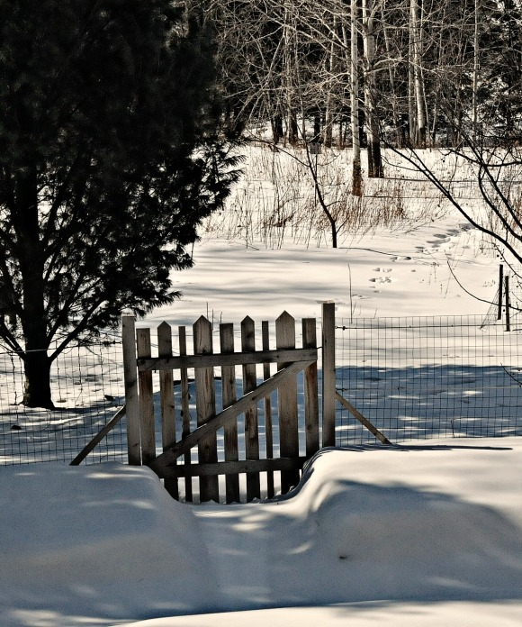 This gate set out to conspire with the sun this morning, I swear, leading me on to believe that a warm front had moved in overnight.  Just beyond the shadows spring melt was sweetening the air.   Liar.  Fooler.  Twenty degrees still leaves my cheeks cold and my hands numb.  And the snow banks still smell like winter.