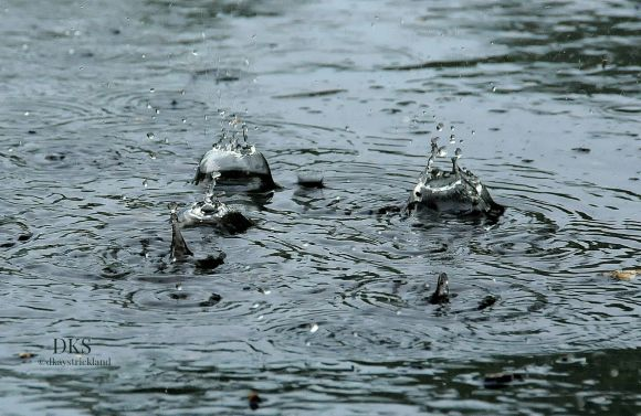 Raindrops#3.EH
