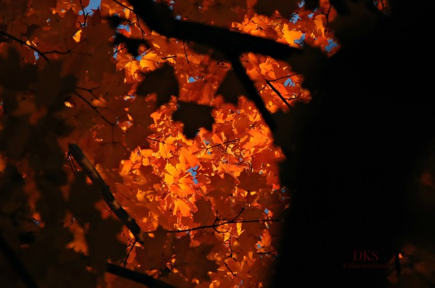 I trapped time with a lens, and caught a tree dressed like a Halloween pumpkin.