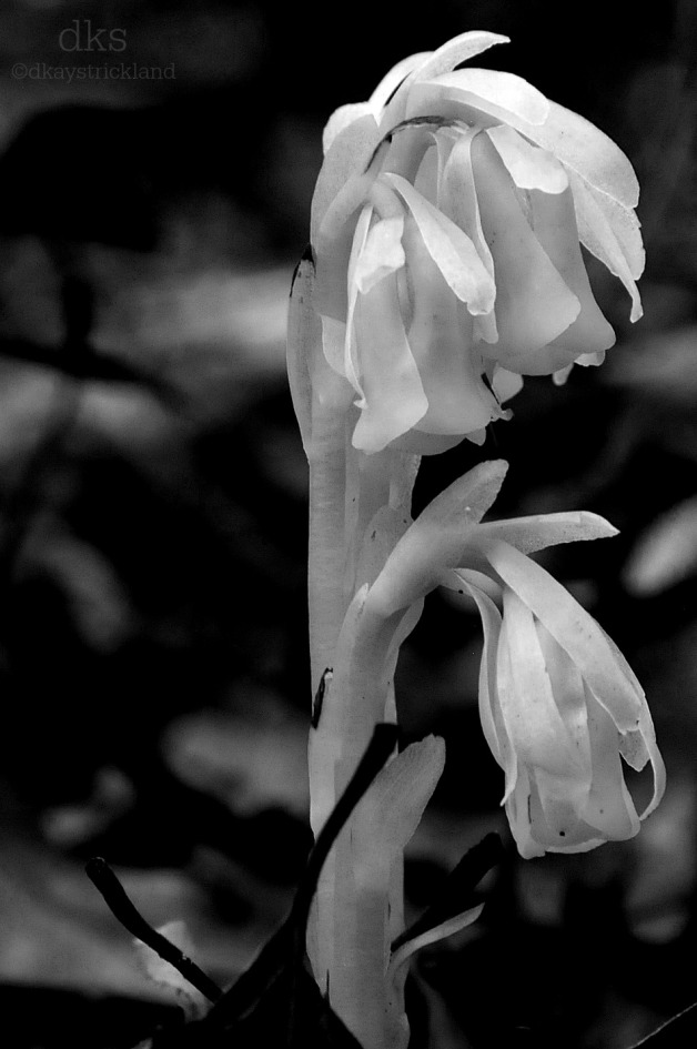 Ghost Flower 02