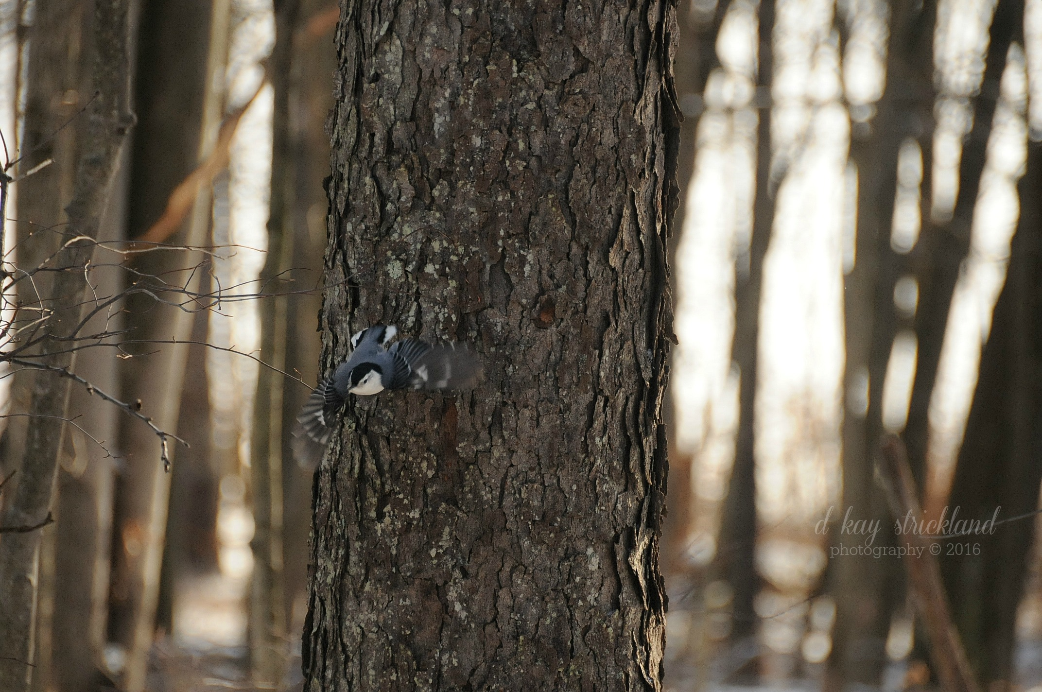 metering-exercise-30dec2016-nuthatch