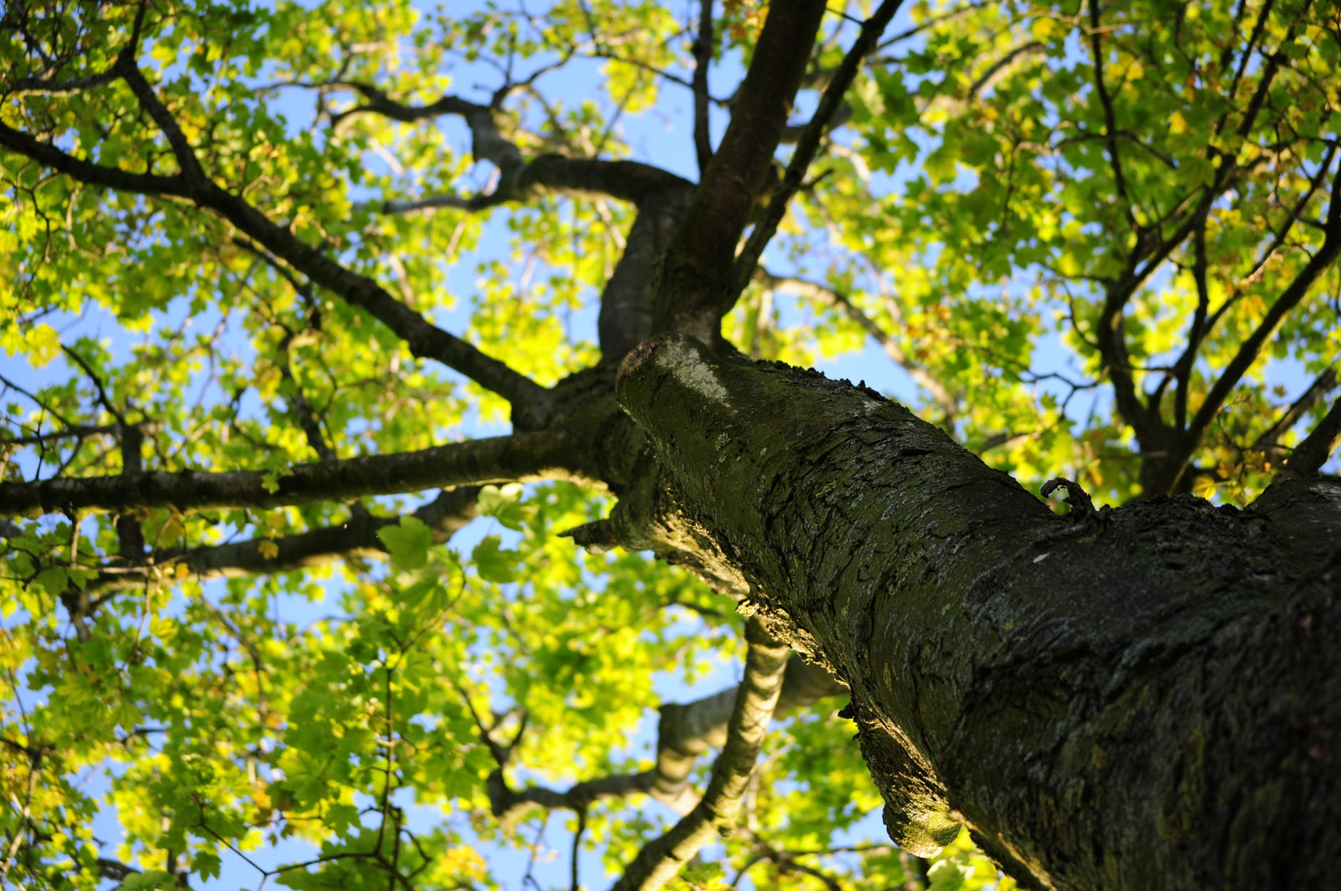wood-nature-leaves-tree.jpg